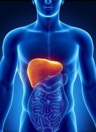 Important Things You Must Know about Liver Detox