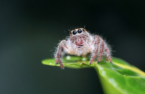 Hate Spiders? Well You'll Love What Their Venom Can Do For You