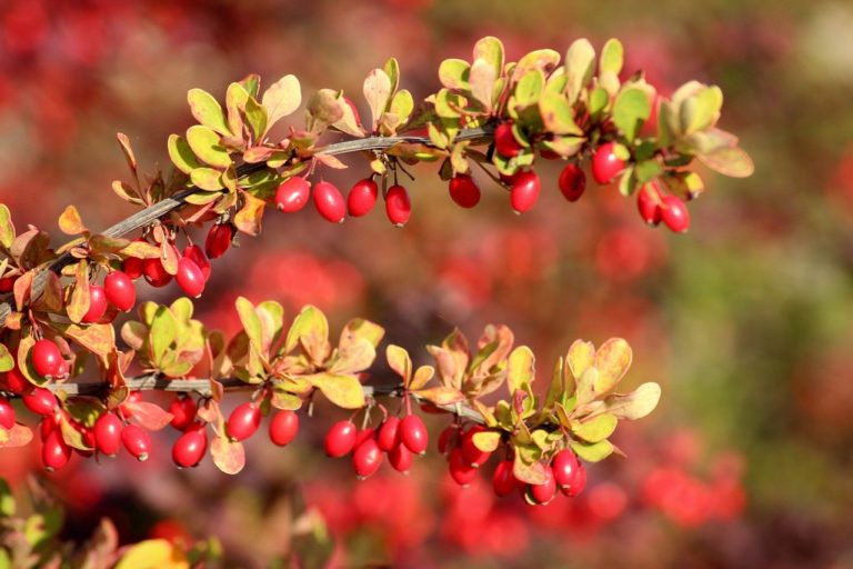4 More Reasons to Take Berberine