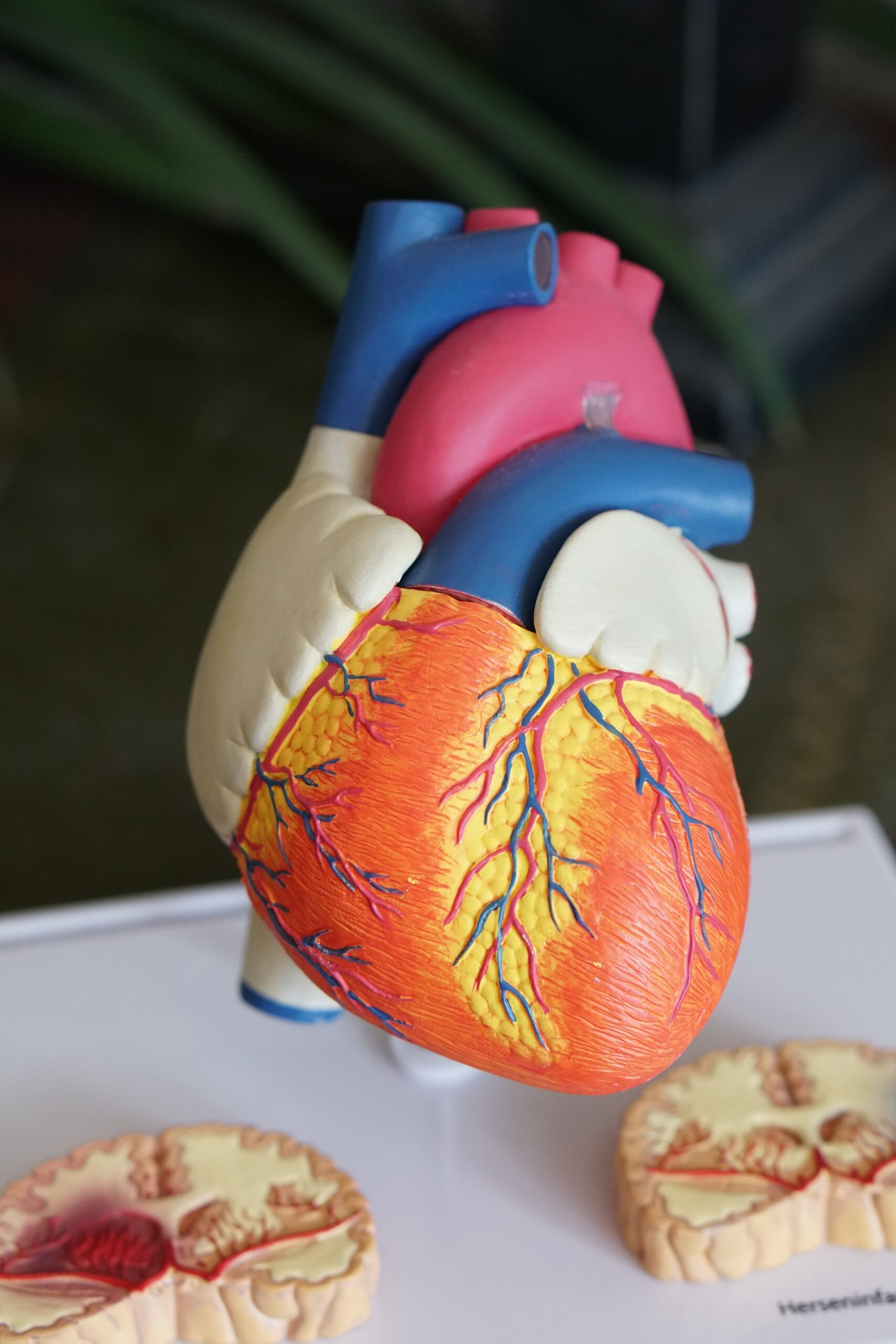8 Weird Facts about the Human Heart