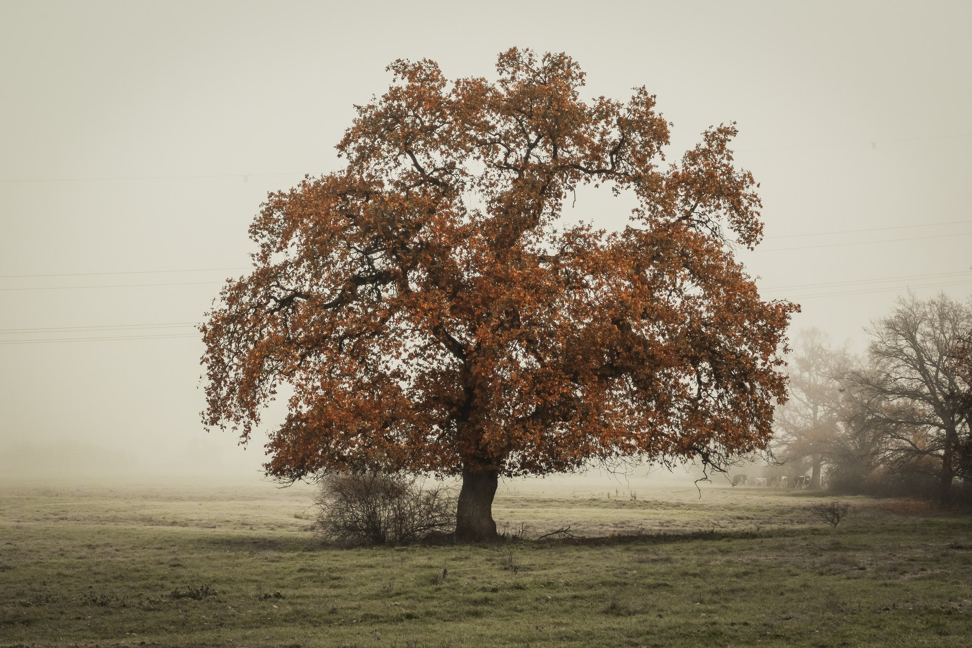 Taking Oak Trees For Energy?