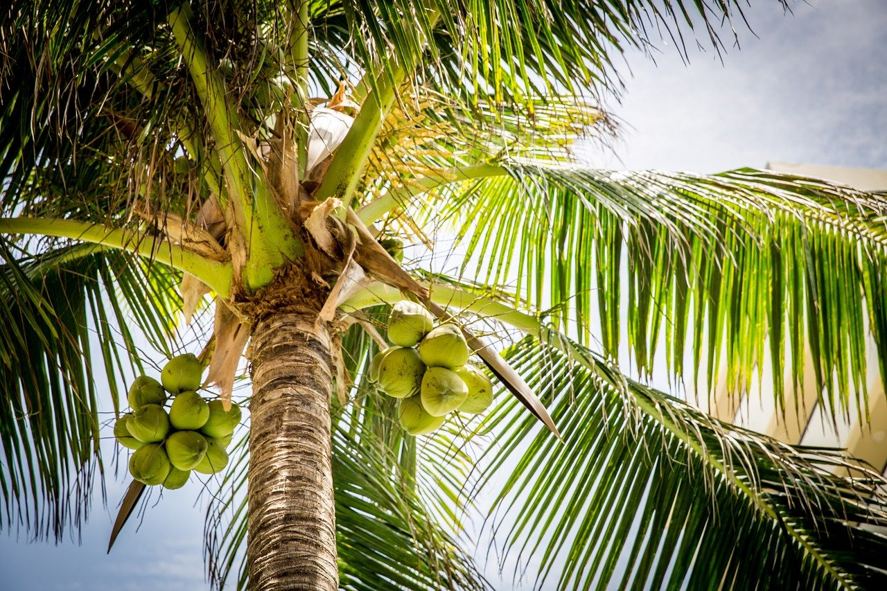 Using Coconut For Kids' Safety